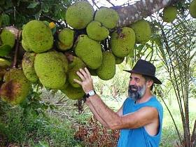 Cape Trib Exotic Fruit Farm - Accommodation Airlie Beach
