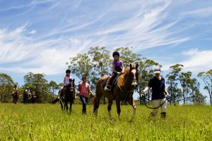 Port Macquarie Horse Riding Centre - Accommodation Airlie Beach