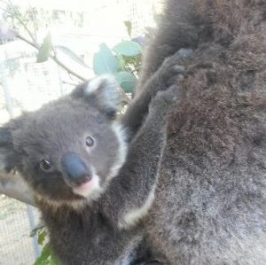 West Oz Wildlife Petting Zoos - Accommodation Airlie Beach